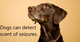 Dogs can detect scent of seizures
